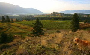 Baillie-Grohman Estate Winery -BC, Canada